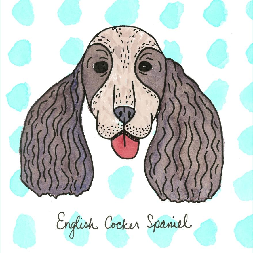 EnglishCockerSpaniel