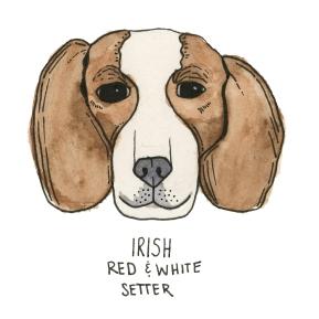 IrishSetter