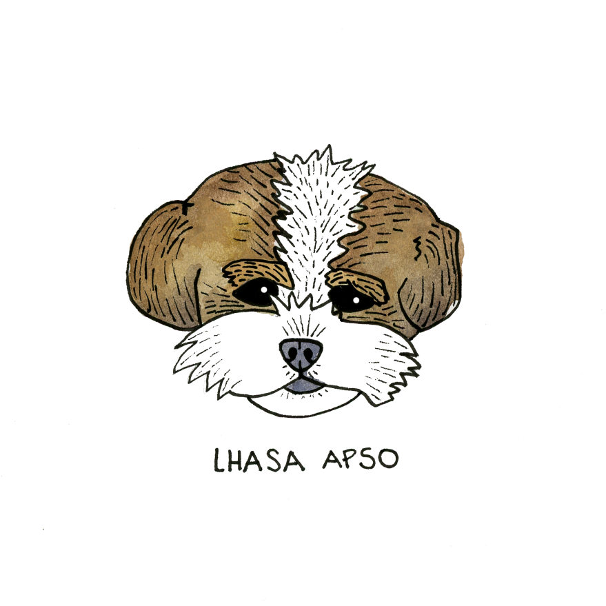LhasaApsa0883